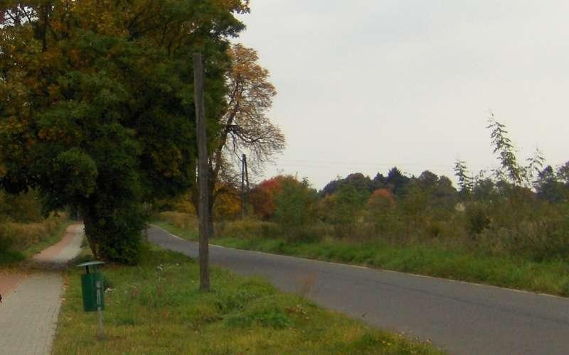 droga do parku pałacowego w Trzciance
