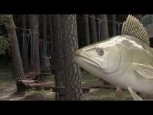 Embedded thumbnail for Najpierw na ryby, potem na grzyby, potem na ...
